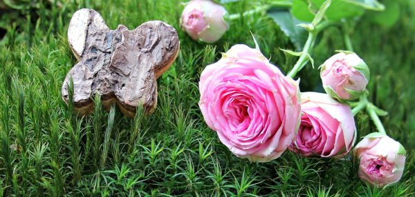 Pink Garden Rose on a bed of grass with wooden butterfly